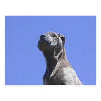 Hundejahre… Postkarte