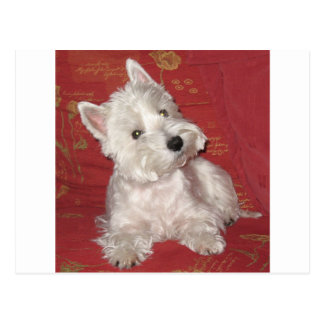 Hundekunst: das Westie Postkarte