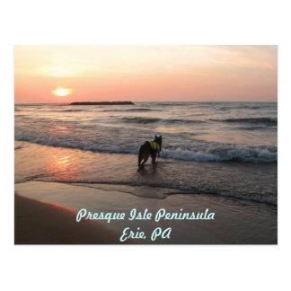 HundeLiebe-Sonnenuntergänge Postkarte