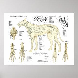 HundeNervensystem-Anatomie-Plakat-Diagramm Poster