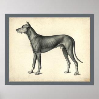 Hundeoberflächentopographie-Anatomie-Druck Poster