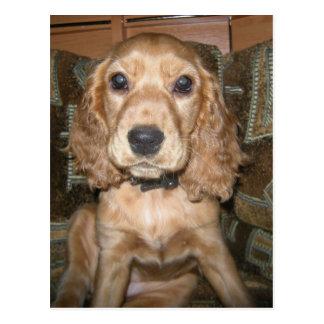 Hundepostkarten Postkarte