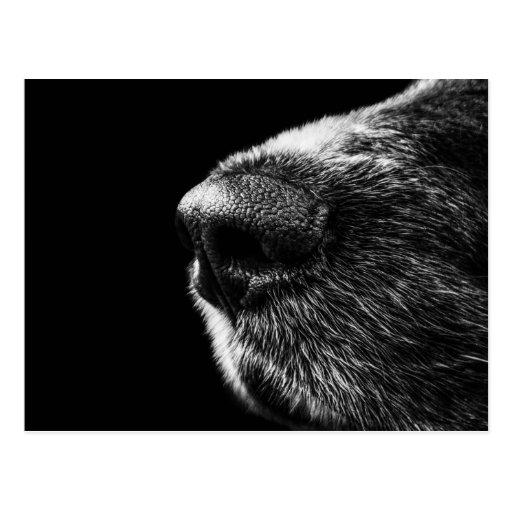 Hundesauganleger-Postkarte