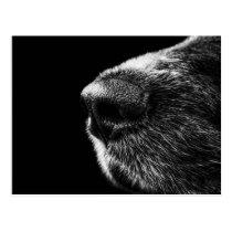 Hundesauganleger-Postkarte Postkarten
