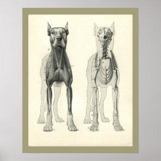 Hundeschädel-Bein-Skeleton Muskel-Anatomie-Druck Poster