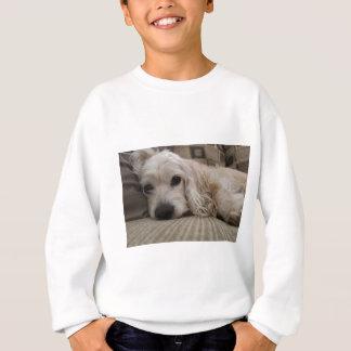 Hundeshirt Sweatshirt