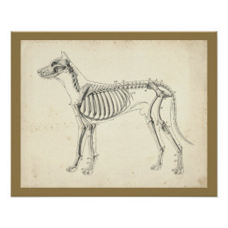 Hundeskelett-Knochen-Veterinäranatomie-Druck Poster