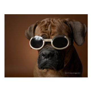 Hundetragende Sonnenbrille Postkarte