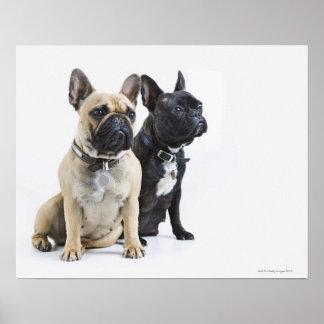 Hundetraining u. -gehorsam posterdruck