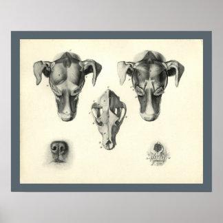 Hundeveterinärschädel-Kopf-Muskel-Anatomie-Druck Poster