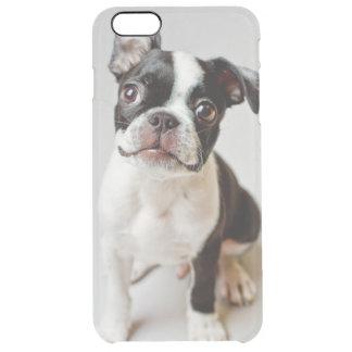 Hundewelpe Bostons Terrier Durchsichtige iPhone 6 Plus Hülle