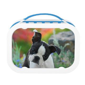 Hundewelpen-Brotdose Bostons Terrier Brotdose