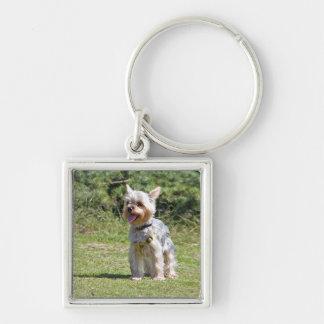 Hundyorkshires Terrier keychain, Geschenkidee Schlüsselanhänger