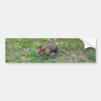 Hungriges Kaninchen auf Rasen Autoaufkleber