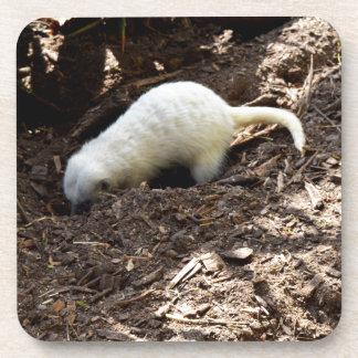Hungriges weißes Meerkat, Untersetzer