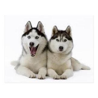 Huskies Postkarten