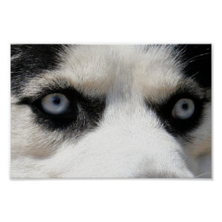 Husky-Dämon 3 Plakatdruck