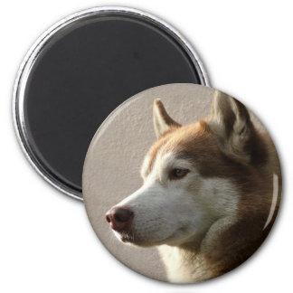 Husky-Hunde Runder Magnet 5,7 Cm