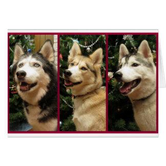 Husky-Weihnachtsfeiertags-Karte Grußkarte