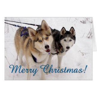 Husky-Weihnachtskarte Grußkarte