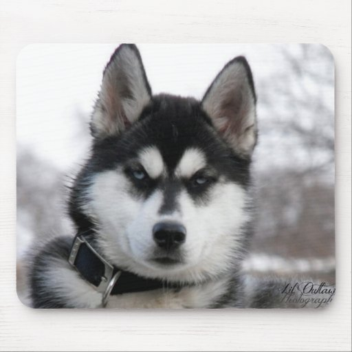 Husky-WelpenMausunterlage Mousepads