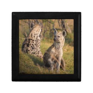 Hyänen Erinnerungskiste