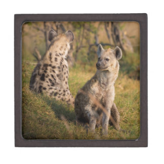 Hyänen Kiste