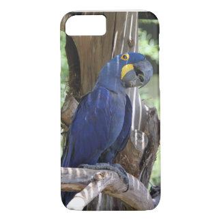 Hyazinthe Macaw-Telefonabdeckung iPhone 8/7 Hülle