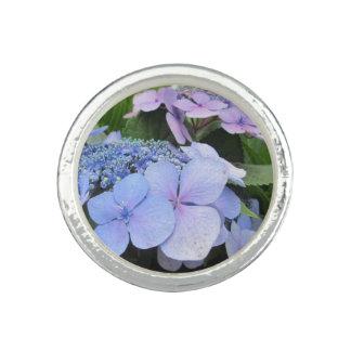 Hydrangea-blaue lila hübsche Blume Ringe