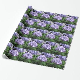 Hydrangeas an Trebah Gärten, Cornwall Geschenkpapier
