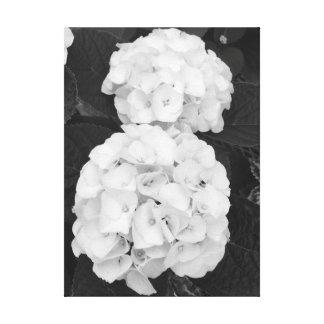 Hydrangeas Schwarzes u. Weiß Leinwanddruck