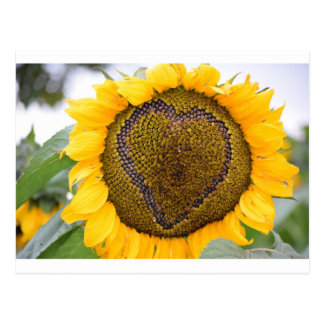 I Herz-Sonnenblume Postkarte