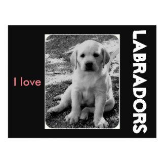 I Liebe Labradors Postkarte