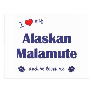 I Liebe mein alaskischer Malamute (männlicher Postkarte