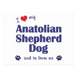 I Liebe mein anatolischer Schäfer-Hund (männlicher Postkarte