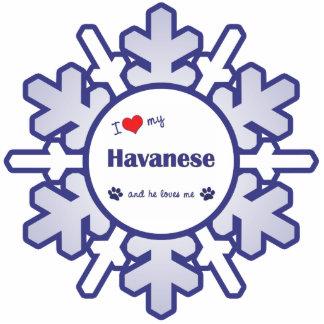 I Liebe mein Havanese (männlicher Hund) Photo Figur