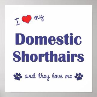 I Liebe mein inländisches Shorthairs (mehrfache Ka Posterdrucke