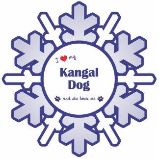 I Liebe mein Kangal Hund (weiblicher Hund) Fotoausschnitte