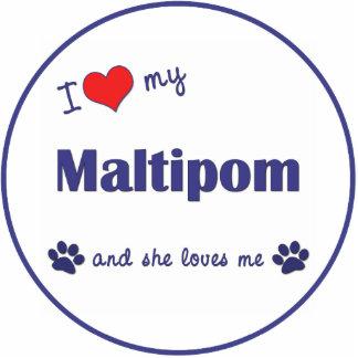 I Liebe mein Maltipom (weiblicher Hund) Photoausschnitt