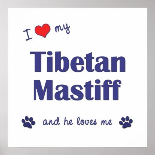 I Liebe mein tibetanischer Mastiff (männlicher Hun Plakat