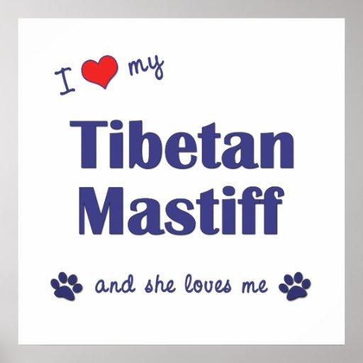 I Liebe mein tibetanischer Mastiff (weiblicher Hun Plakat