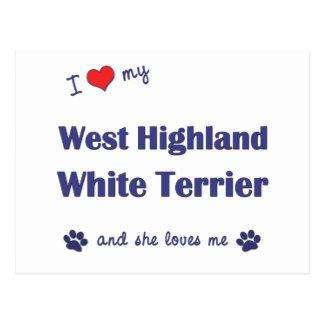 I Liebe mein Westhochland-weißer Terrier Postkarte
