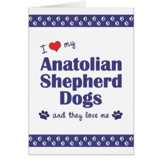 I Liebe meine anatolischen Schäfer-Hunde Karte