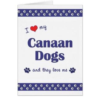 I Liebe meine Canaan Hunde (mehrfache Hunde) Karte