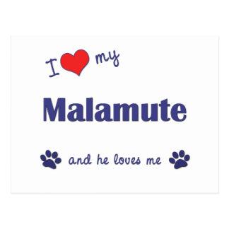 I Liebe meine Malamutes (männlicher Hund) Postkarte