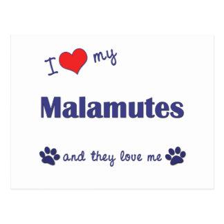 I Liebe meine Malamutes (mehrfache Hunde) Postkarte