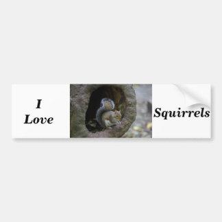 I Squirrels Liebe Autoaufkleber