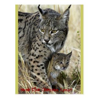 Iberischer Luchs - Iberian Lynx Postkarte