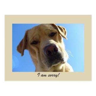 Ich bin - niedliches gelbes Labrador-Porträt Postkarte