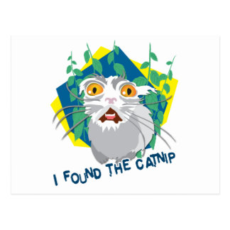 Ich fand die Katzenminze Postkarte